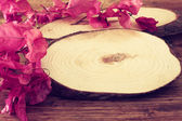 Cross sections of tree trunk and bright pink flowers — Stock Photo
