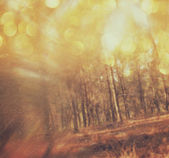 Abstract photo of light burst among trees and glitter bokeh lights. — Stock Photo