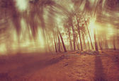 Blurred abstract photo of light burst among trees — Stock Photo