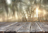 Wood boards and summer light among trees. textured image. filtered. — Stock Photo