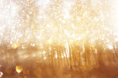 Abstract photo of light burst among trees and glitter bokeh lights. filtered image and textured. image is blurred. — Stock Photo