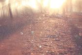 размытое абстрактное фото света взрыв среди деревьев и блеск огней боке. фильтрованного изображения — Стоковое фото