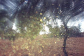 Blurred abstract photo of light burst among trees and glitter bokeh lights. filtered image and textured. — Stock Photo