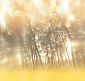 Blurred abstract photo of light burst among trees and glitter bokeh lights. filtered image — Stock Photo