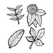 Collection de feuilles — Vecteur