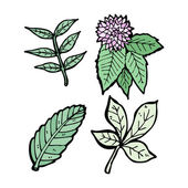 叶子收藏 — 图库矢量图片