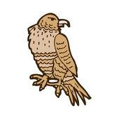 Hawk — Stock Vector