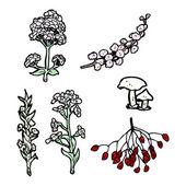 Fleurs et champignons — Vecteur