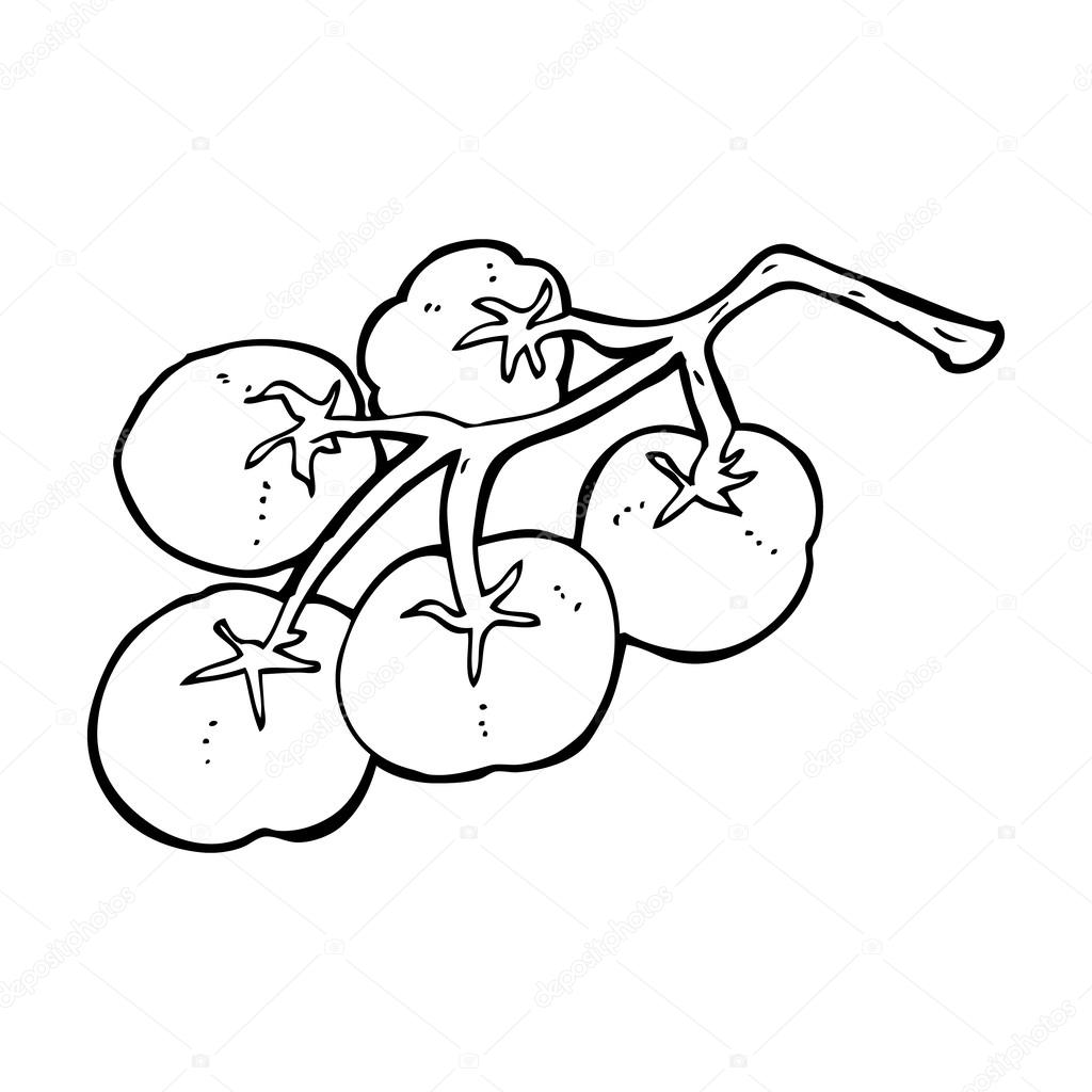 Tomato Vine Drawing Tomatoes on Vine IllustrationTomato Line Drawing
