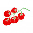 Tomatoes on vine illustration — Stock Vector #41143053