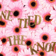 We tied the knot sign on pink Gerberas — Foto Stock