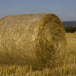 Hay rolls  drying in the warm sun — Stock Photo