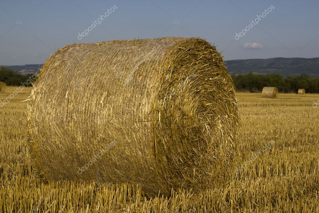 Hay rolls  drying in the warm sun — Stock Photo #13254841