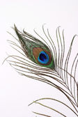 Colorful peacock feather — Stock Photo