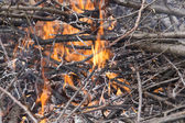 Young birch branch in fire — Stock Photo