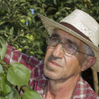Portrait of a senior farmer checking the apricot in his orchard — Stock Photo #32069343