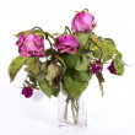 Boquet of dry roses — Stock Photo #47430497