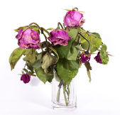 Boquet of dry roses — Stock Photo