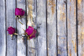 Dry  rose petals  on old wooden plates.  — Stock Photo
