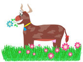 Brown cow in the meadow — Stock Photo