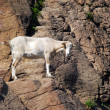 Goat Rock — Stock Photo