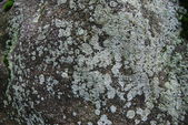 Mossy stone texture — Stock Photo