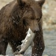 Grizzly bear — Stockfoto #12236281