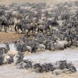 Wildebeest — Stock Photo #12492061