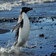 Adelie Penguins — Stock Photo #27128223