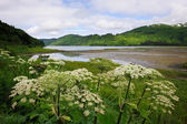 Landscape Kodiak Island — Stock Photo