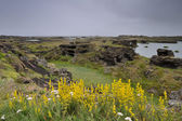 Landscape of Myvatn — Stock Photo