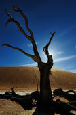 Deadvlei in Sossusvlei — Stock Photo