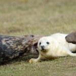 Seal — Stock Photo #37523457