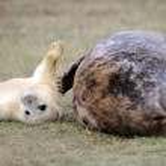 Seal — Stock Photo #37523643