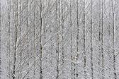 Bosque de nieve — Foto de Stock
