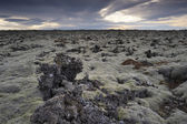 Lava field at Iceland. — Stock Photo