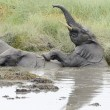 Elephants playing in a water — Stock Photo #51528079