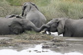 Young elephants playing in a water — 图库照片
