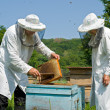 Stock Photo: Beekeepers 20