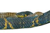 Två ormar 9 — Stockfoto