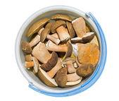 Mushrooms in bucket 7 — Stock Photo