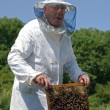 Beekeeper — Stock Photo #13132751
