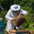 Beekeeper — Stock Photo #13297050