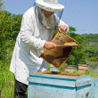 beekeeper — Stock Photo #13509891