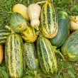 Vegetable marrows — Stock Photo #13755557