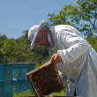 Beekeeper — Stock Photo #13877016