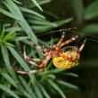 Stock Photo: Spider on spider web