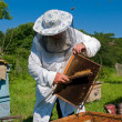 beekeeper — Stock Photo #14290031