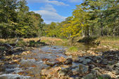 Woodsy river — ストック写真