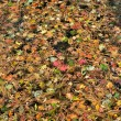 Autumn leaves on water — 图库照片